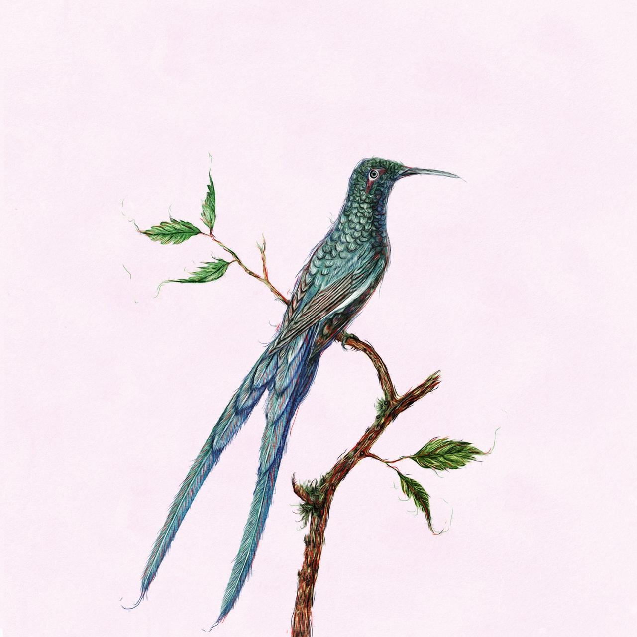 stevie anderson Birds